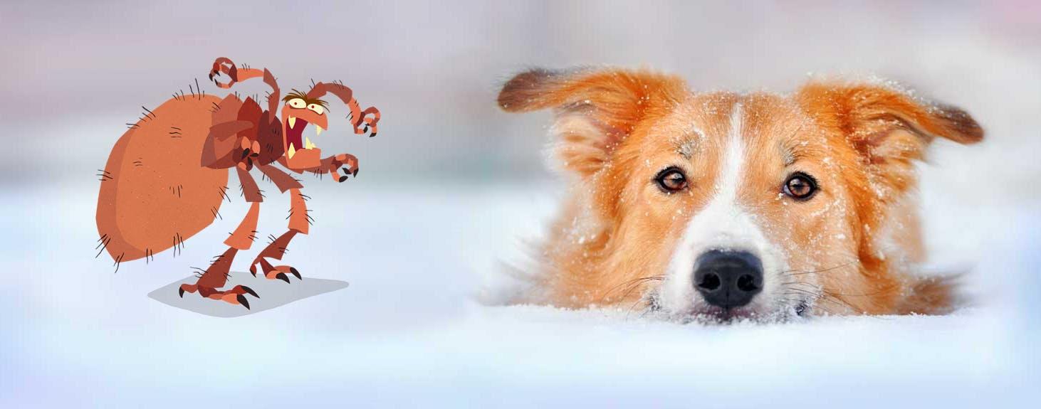 Deparazitarea externă a câinilor și pisicilor iarna