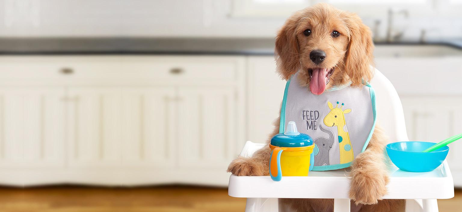 Care este cea mai bună mâncare pentru câinele meu?