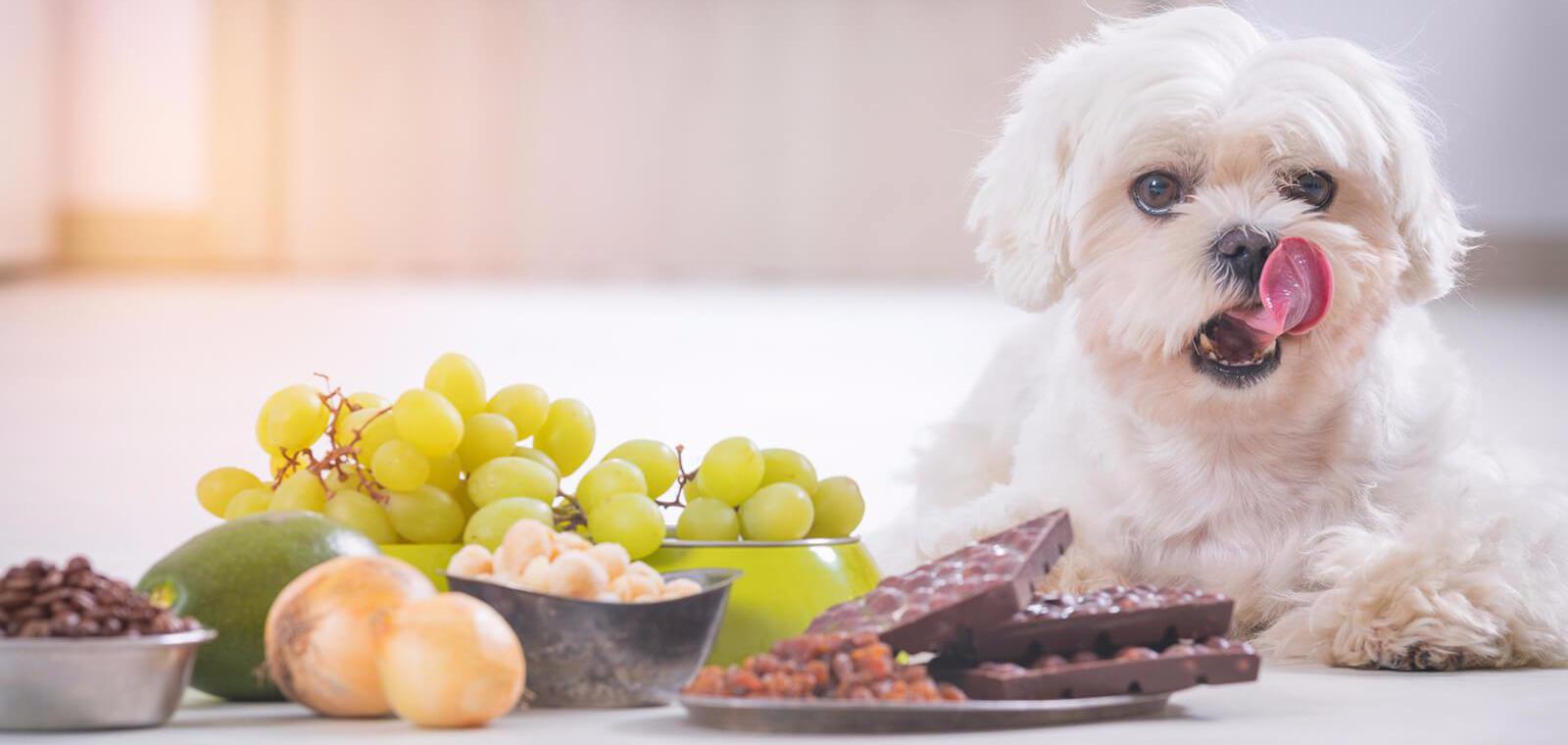5 alimente dăunatoare pentru câini